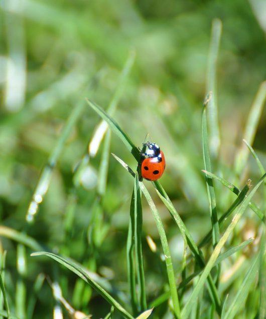 Un jardin loin des insectes